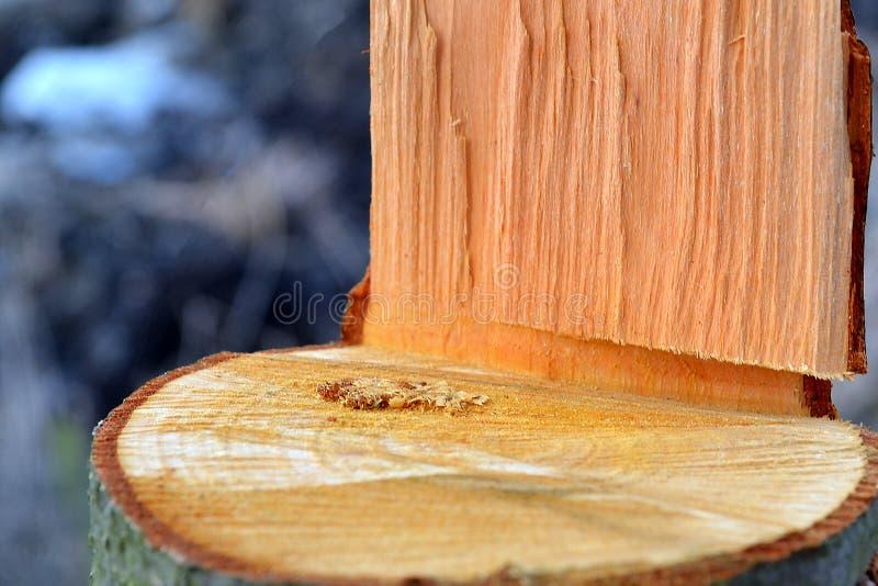 Texture en bois avec la scierie de sciure photos libres de droits