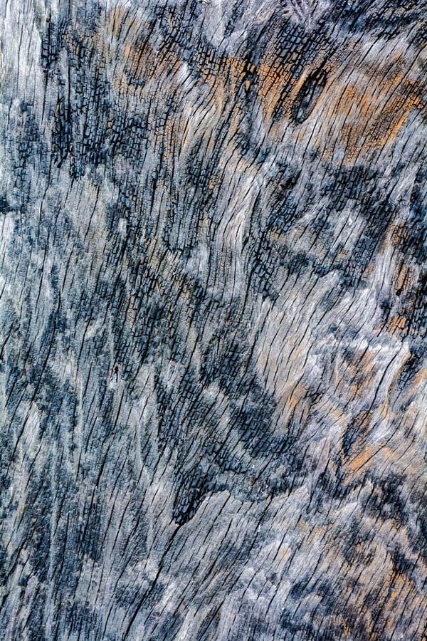 Texture en bois brûlée images stock