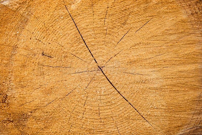Texture en bois criquée jaune-clair image stock
