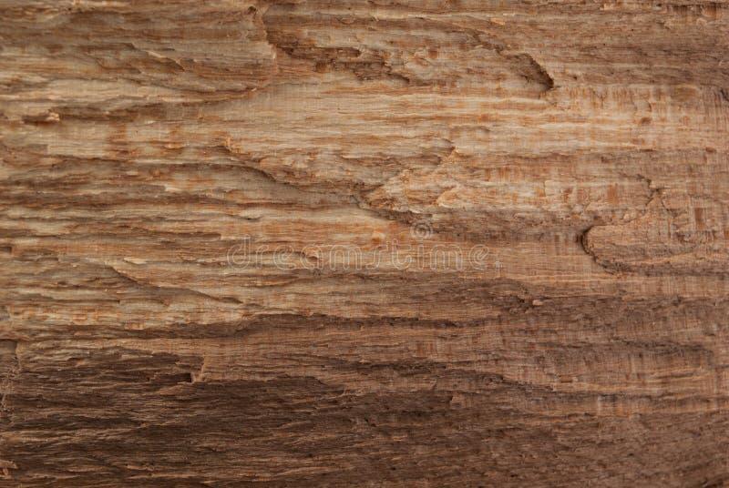 Texture en bois cru et modèle naturel pour la conception et la décoration images libres de droits