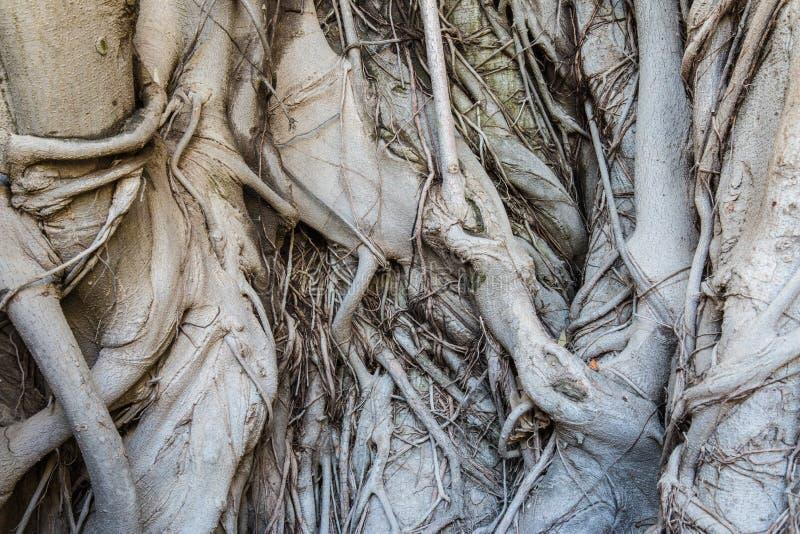 Texture en bois d'écorce photos libres de droits