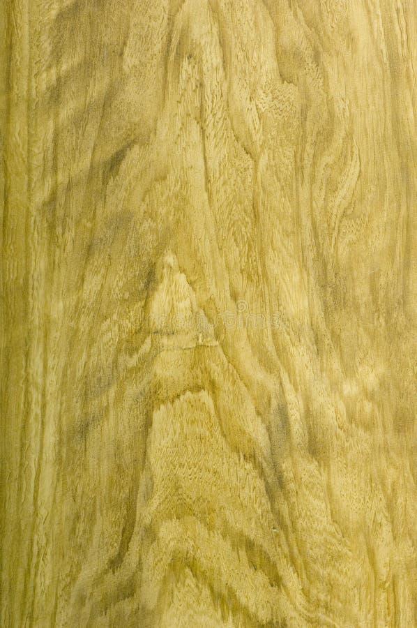 Texture en bois d'arbre d'orme photo stock