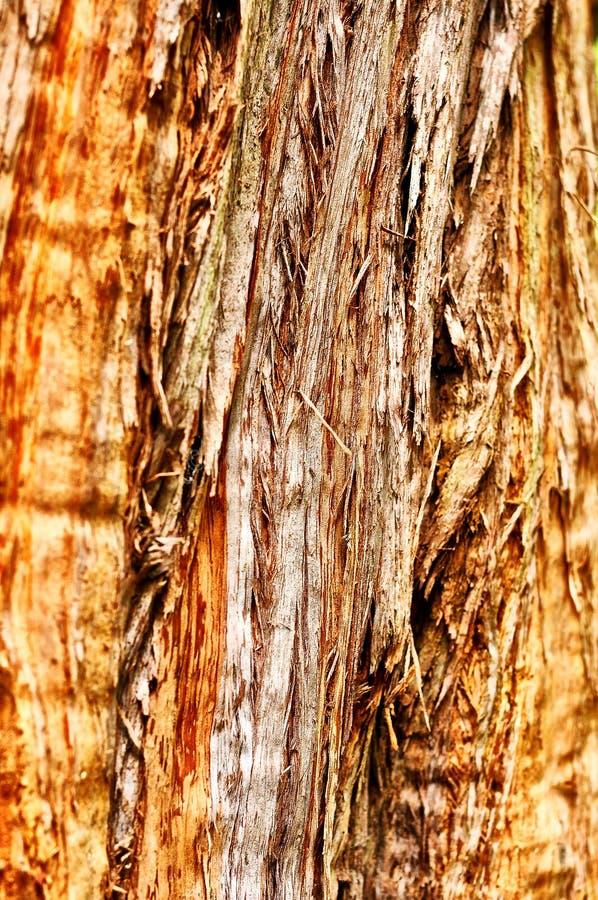 Texture en bois de Bakground image libre de droits