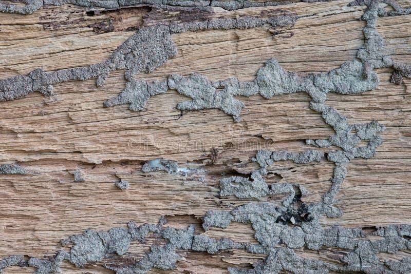 Texture en bois de Brown photos libres de droits