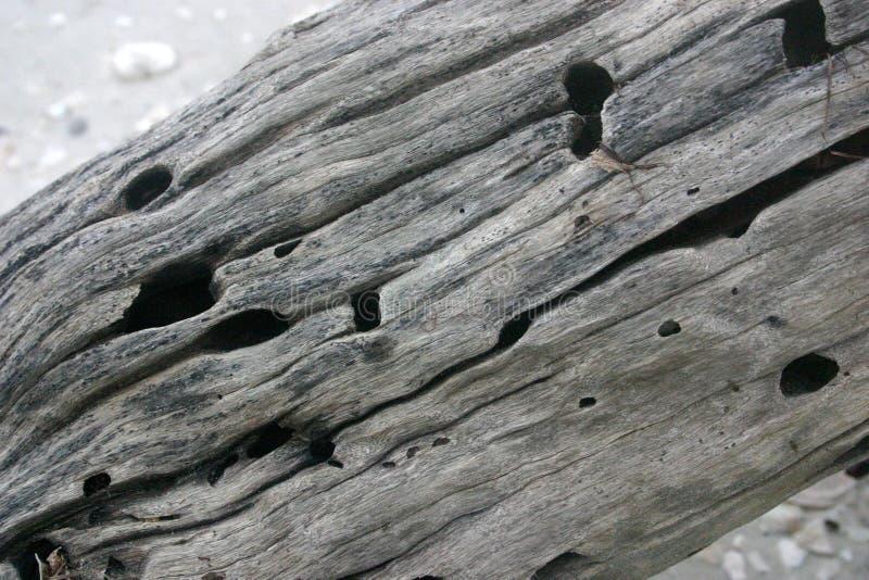 Texture en bois de chassoir photographie stock