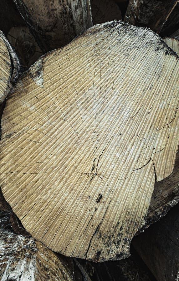 Texture en bois de modèle onduleux d'anneau d'une tranche d'arbre Tron?on en bois tremble bouleau conif?re illustration stock