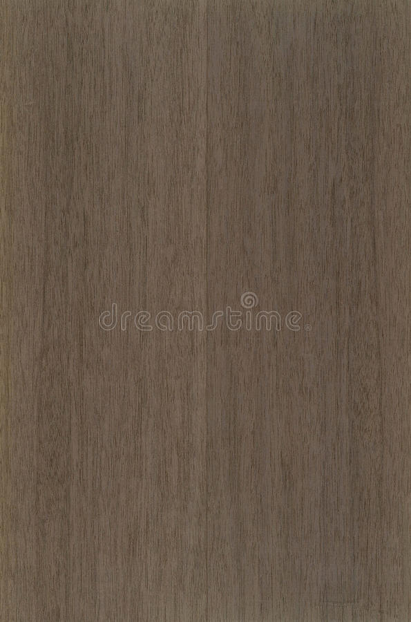Texture en bois de placage de Mansonia photo stock