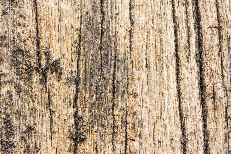 Texture en bois de rondin de dérive de plage photos stock