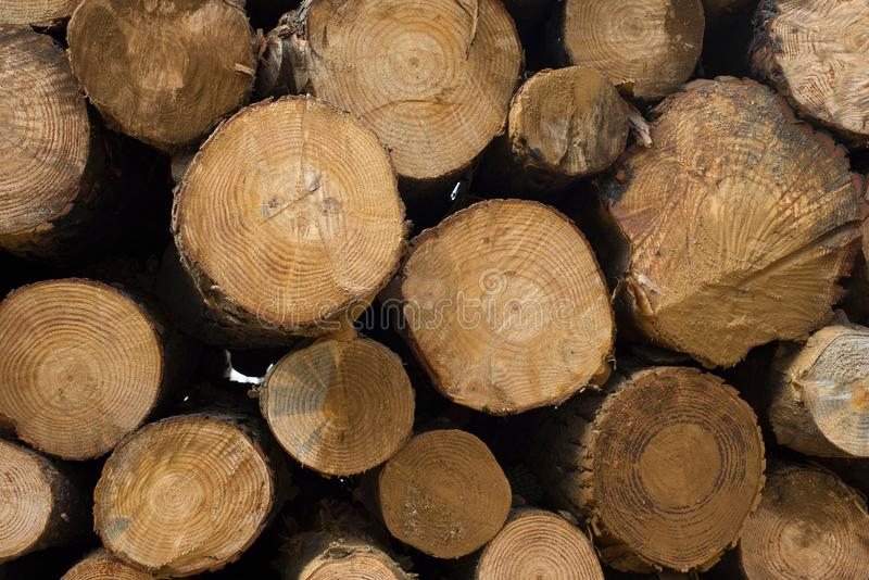Texture en bois de rondin des troncs d'arbre en bois images libres de droits