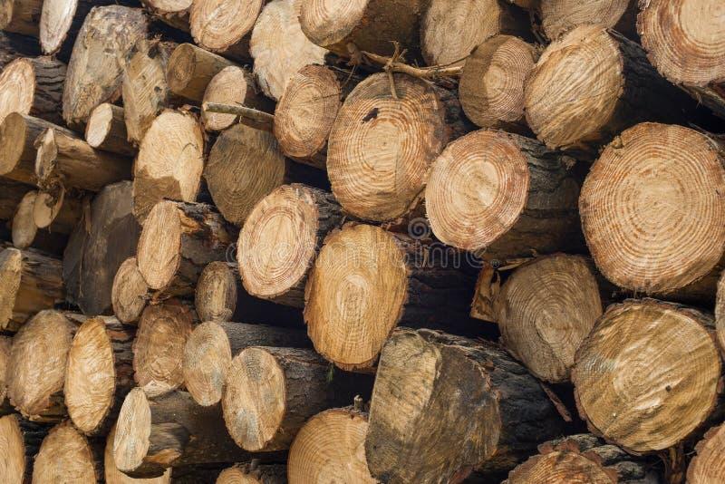 Texture en bois de rondin des troncs d'arbre en bois photo libre de droits