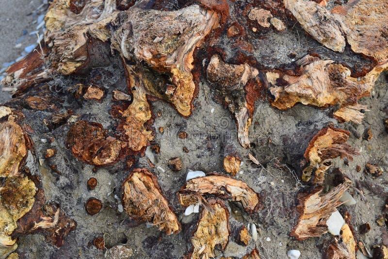 Texture en bois de vieux baril épais putréfié photos stock