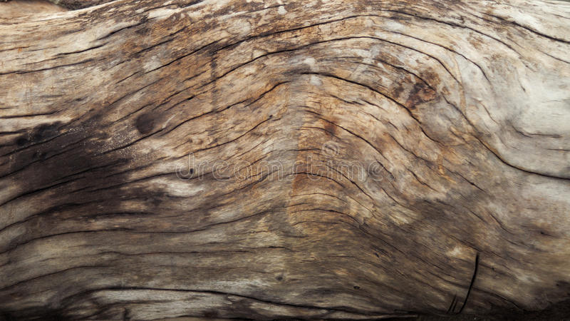 Texture en bois naturelle image libre de droits