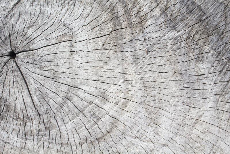 Texture en bois naturelle Coupe de cercles d'arbre Bois de construction gris avec les lignes superficielles par les agents de fen photographie stock libre de droits