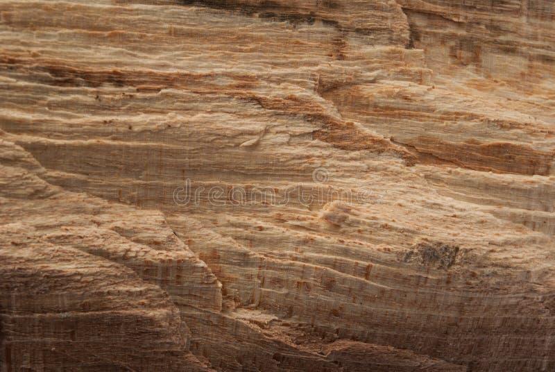 Texture en bois naturelle de beauté pour la conception et la décoration image stock