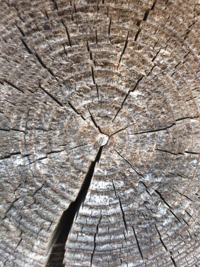 Texture en bois superficielle par les agents d'anneaux d'arbre vieille avec la section transversale d'un rondin coupé montrant le images libres de droits