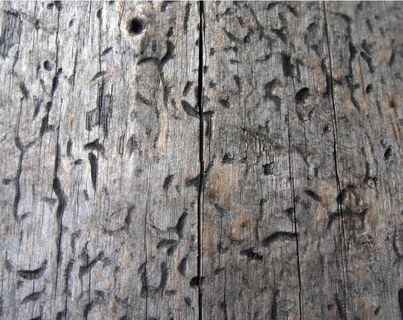Texture en bois, texture de bois de construction, fond de nature photo stock