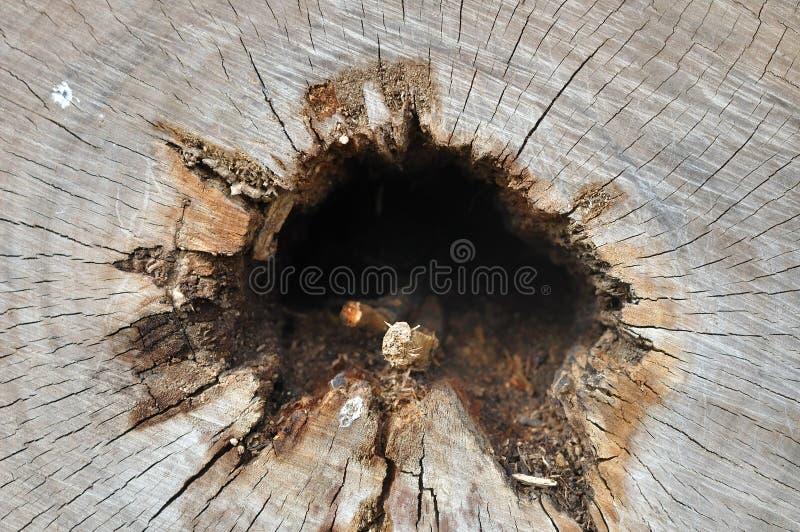Texture en coupe en bois photographie stock libre de droits