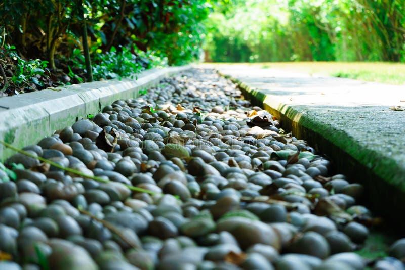 Texture en pierre de fond d'éboulis dans le greentree de forêt photos libres de droits