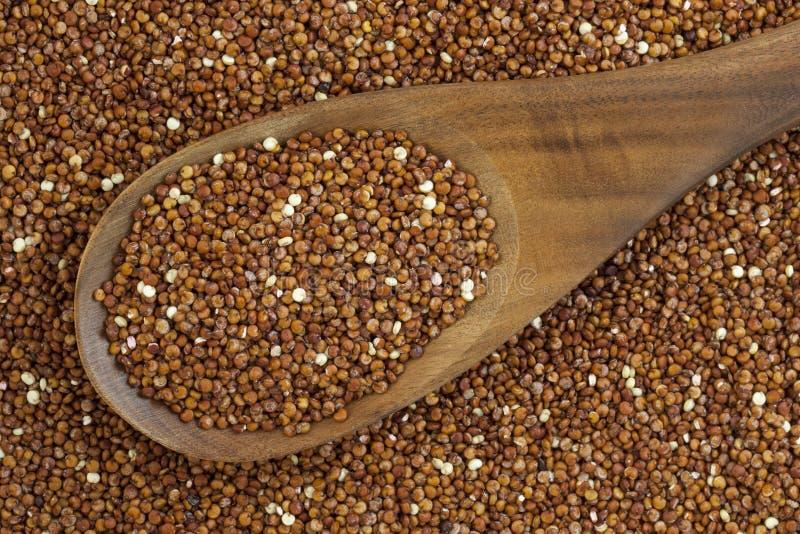 Texture et cuillère rouges de quinoa photos stock