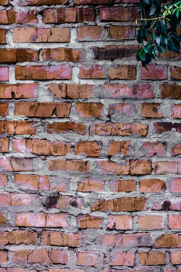 Texture et fond (mur de briques) photo stock