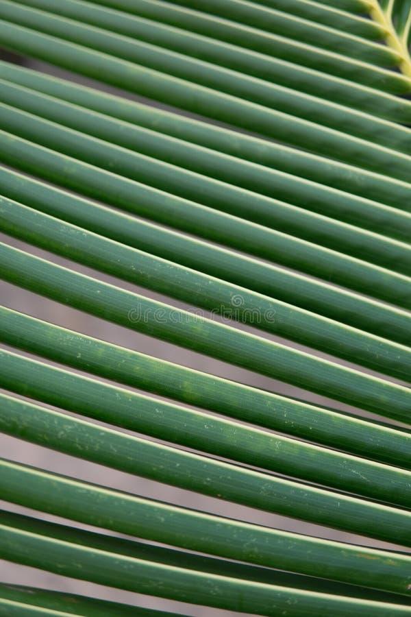 Texture et modèle des palmettes tir de macro de cocotiers de feuille photos stock