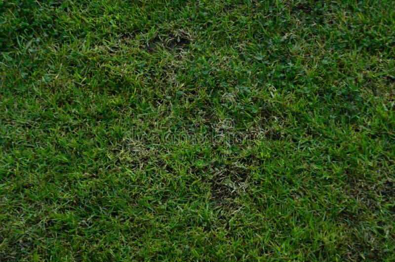 Texture extérieure d'herbe photos stock
