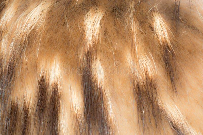 Texture of faux fur, imetiruyuschaya fur animals. Abstrack background stock image