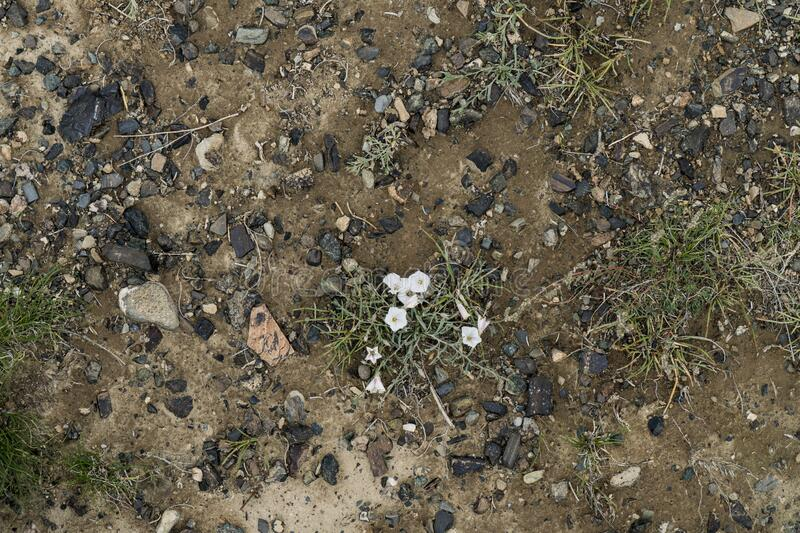 The texture of fine stone on the ground with grass and flowers. Background Image Macro Photography stock image