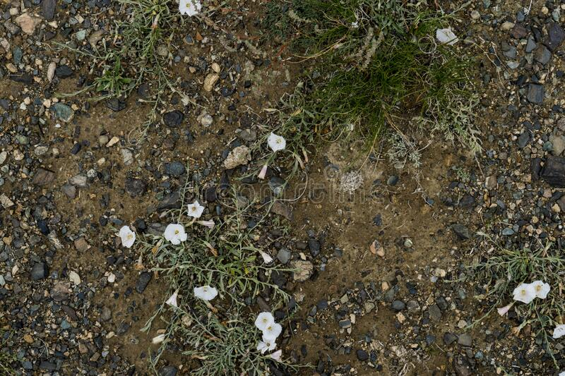 The texture of fine stone on the ground with grass and flowers. Background Image Macro Photography royalty free stock image