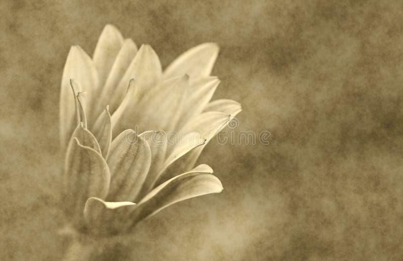 texture florale de papier de fleur   photo stock