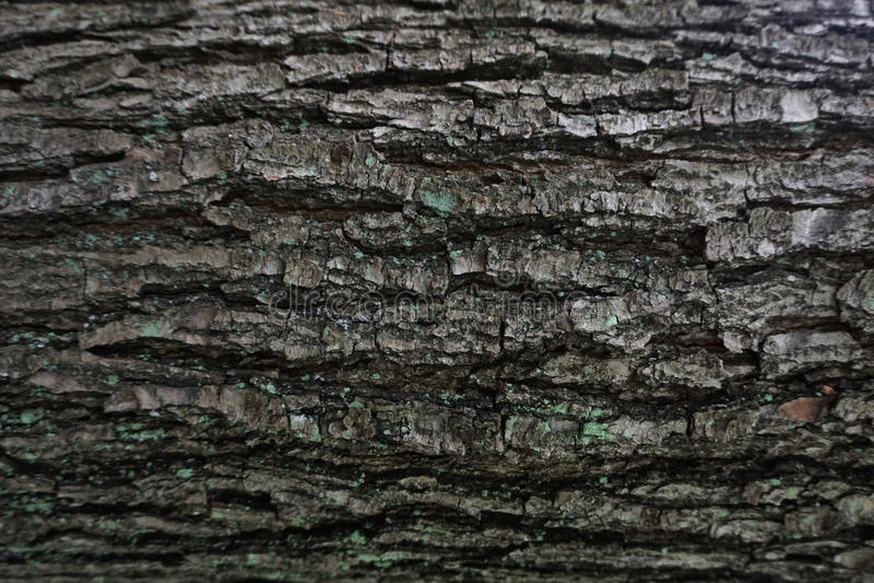 Texture foncée d'arbre d'écorce images libres de droits