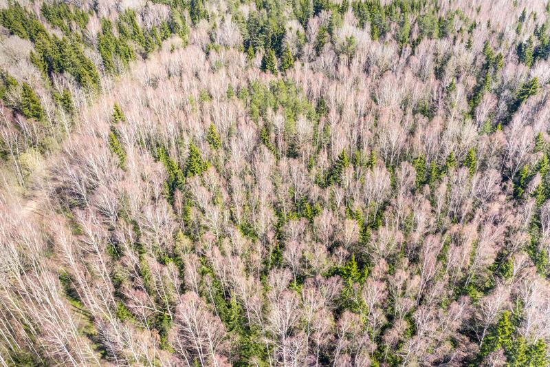Texture of forest view from above. forest pattern. aerial view royalty free stock image