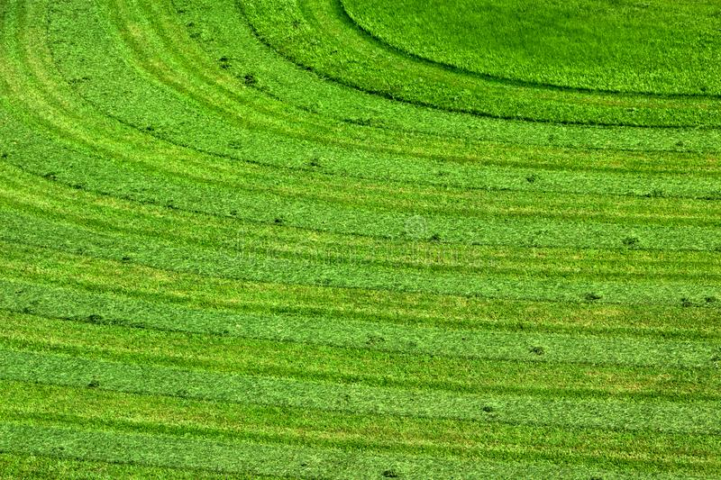 Texture of Freshly Cut Grass for A Natural Background stock photos