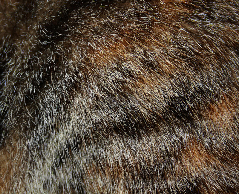 Texture of fur of cat. Macro photography of fur of gray cat royalty free stock images