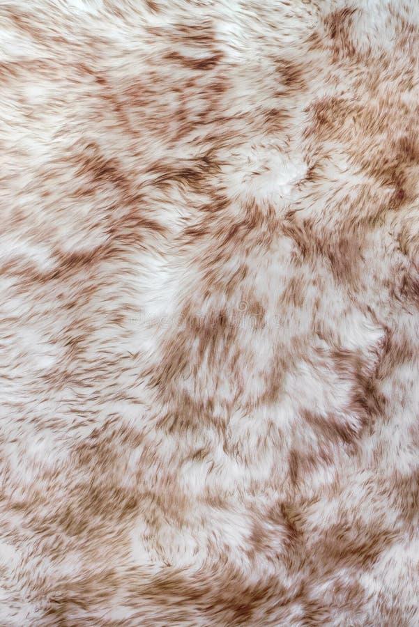 Texture fur of sheep royalty free stock photos