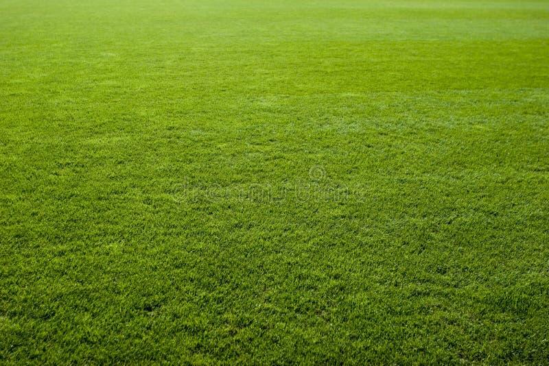 Texture gentille d'herbe verte photographie stock libre de droits