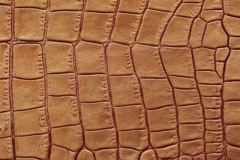 Texture of genuine leather close-up, embossed under the skin of brown reptile, croco. For modern pattern, wallpaper or. Banner design. With place for your text royalty free stock photos