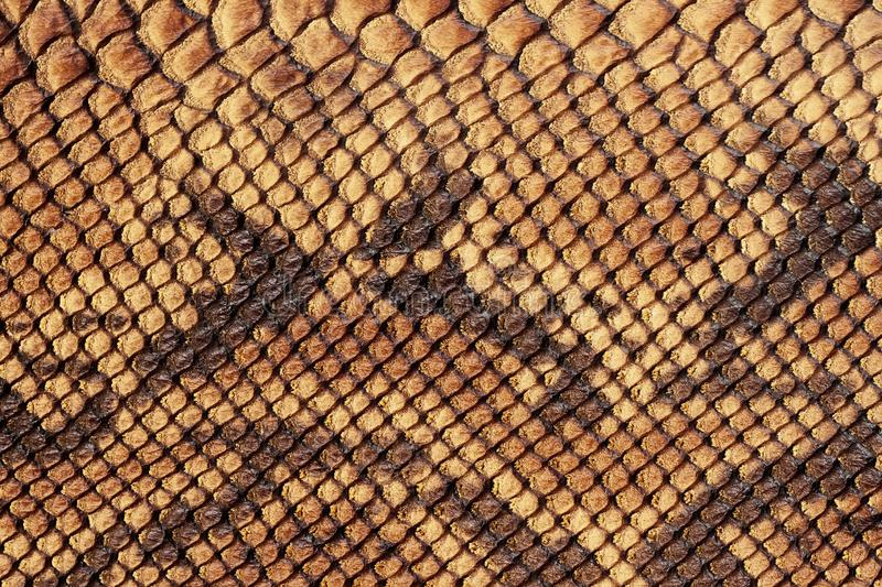 Texture of genuine matte rough leather close-up, embossed under the skin of scaly brown reptile. For modern pattern royalty free stock photography