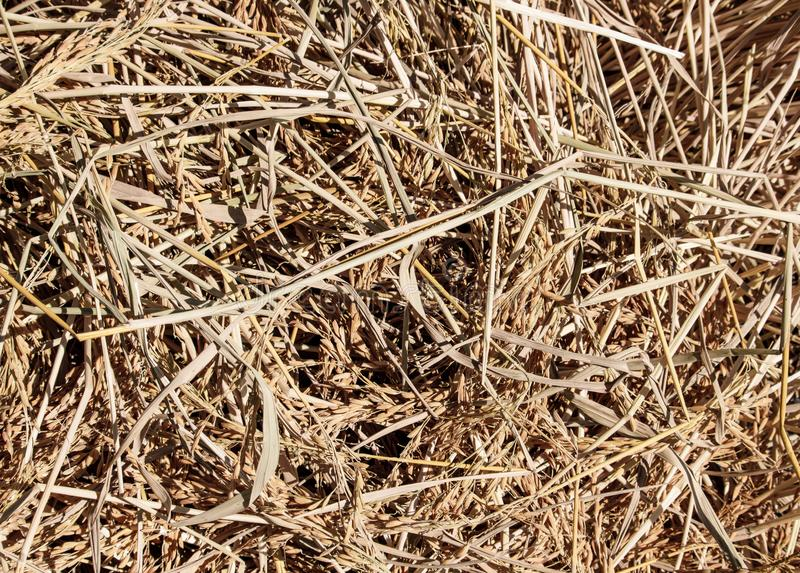 Texture of dry straw pile stock image