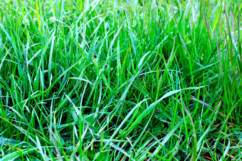texture of grass royalty free stock photo