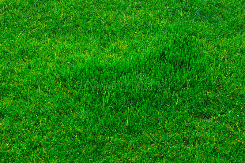 Texture Grass field stock image