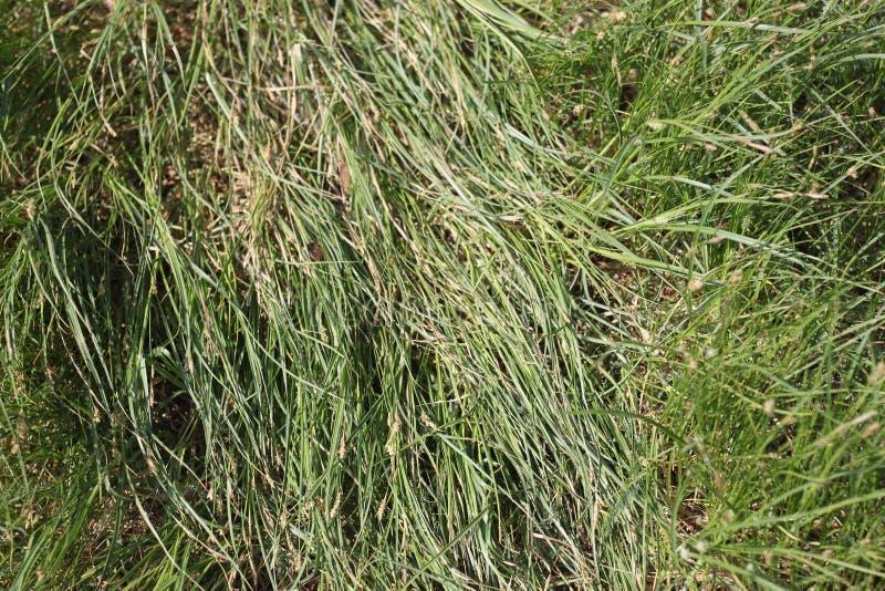 Texture of green grass, background, wallpaper stock photos