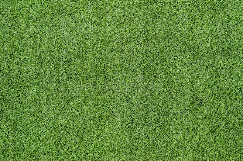 Texture of green grass top view green lawn.  royalty free stock images