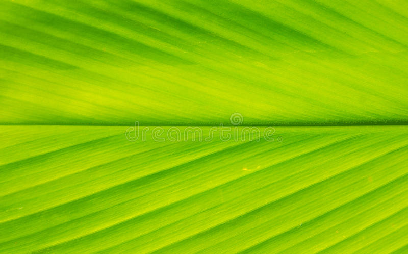 Texture of green leaf stock photography