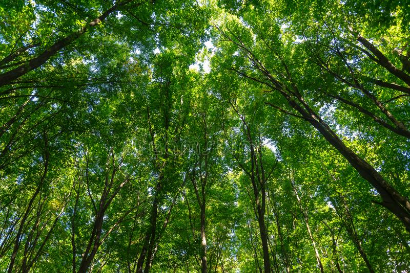 Texture of green leaves of trees in forest stock photos