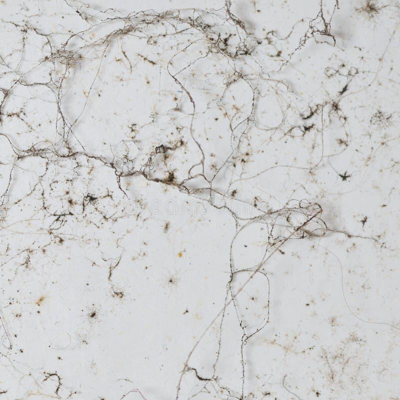 Texture grunge. photos stock