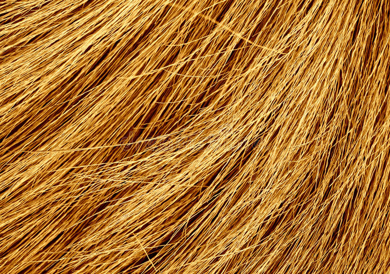 Texture grunge de l'herbe sèche image libre de droits