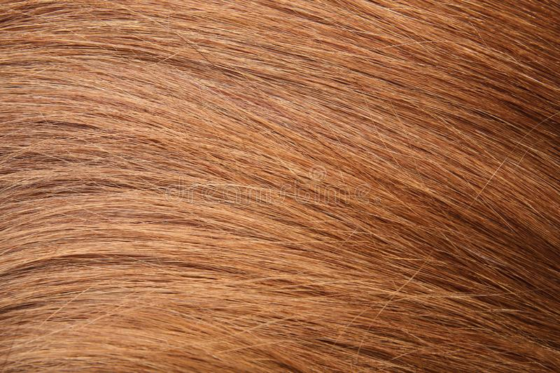 Texture of healthy red hair as background. Closeup royalty free stock photography