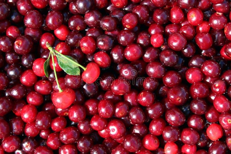 Texture image of fresh summer berries of ripe juicy cherry. Cherry, juicy, ripe, dark, burgundy, texture, scattered, leaves, summer, season, background picture stock photo