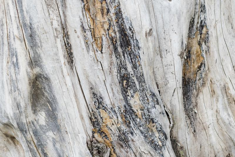 Texture image of an old wooden log. Destroyed by time royalty free stock photography